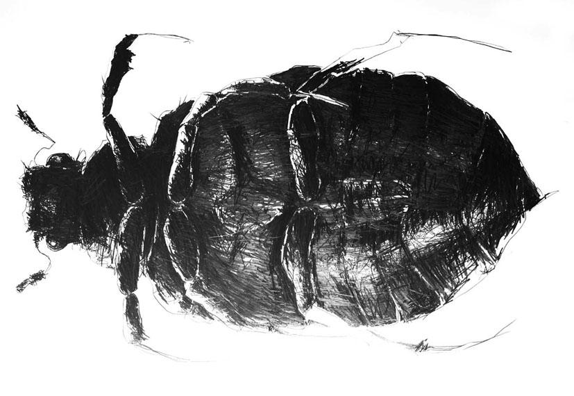 Thomas Autering – Zeichnungen